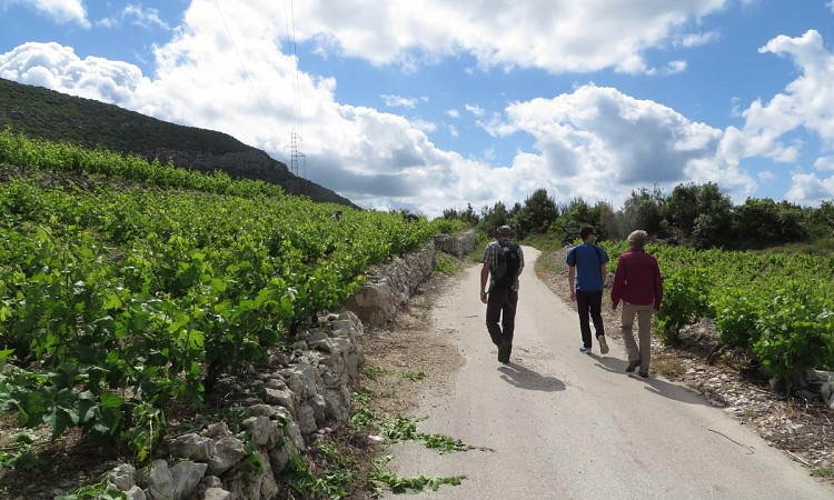 hiking_through_wineyards_peljesac.jpg